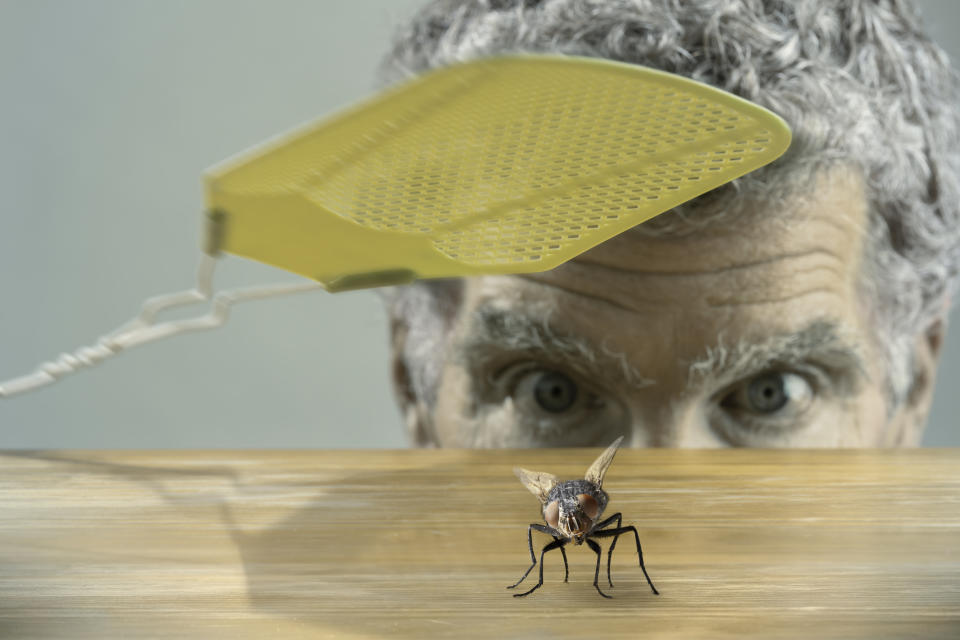 The heatwave has encouraged the flies into our homes. (Getty Images)