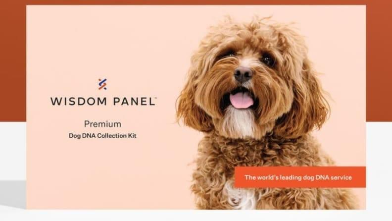 The Wisdom Panel Premium kit is known for its pinpoint accuracy and exhaustive detail.