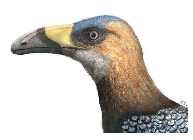 Artist's reconstruction of bird Falcatakely forsterae