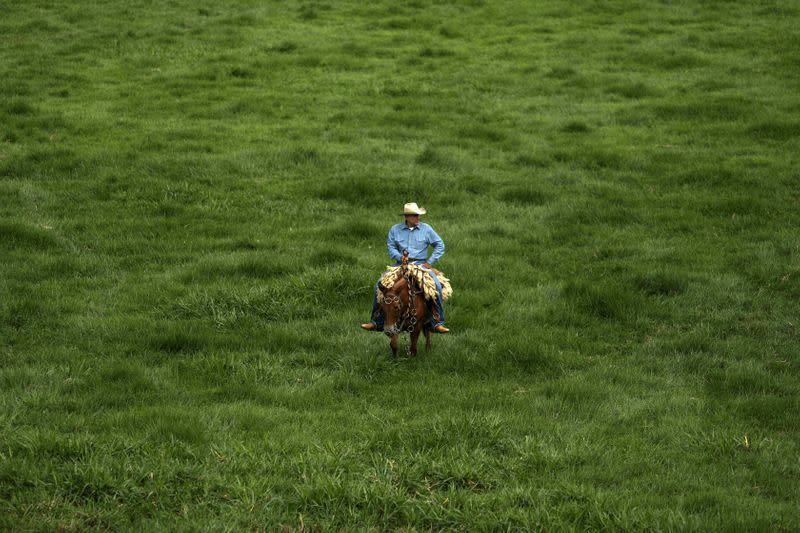 Special Report: One Brazilian farmer tried – and failed – to ranch more responsibly in the Amazon