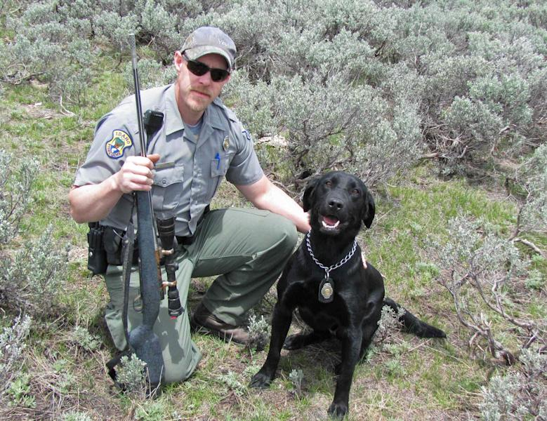"""n this photo taken June 10, 2011 and released by the Nevada Department of Wildlife, Idaho fish and game officer Jim Stirling, poses with canine officer """"Pepper"""" and a rifle they found near Jarbidge, Nev. More than a dozen witnesses helped during the nearly yearlong investigation into the illegal killing of two bull elk near the Nevada-Idaho line. But it was CSI-like crime fighting techniques, old fashion gumshoe and a black lab with a fine-tuned snout that closed the case. The last of five defendants, Larry Hall, 65, and Marty Hall, 45, pleaded guilty Monday in Elko District Court to killing or possessing a bull elk without a valid hunting tag, a gross misdemeanor. (AP Photo/Nevada Dept. of Wildlife, Fred Esparza)"""