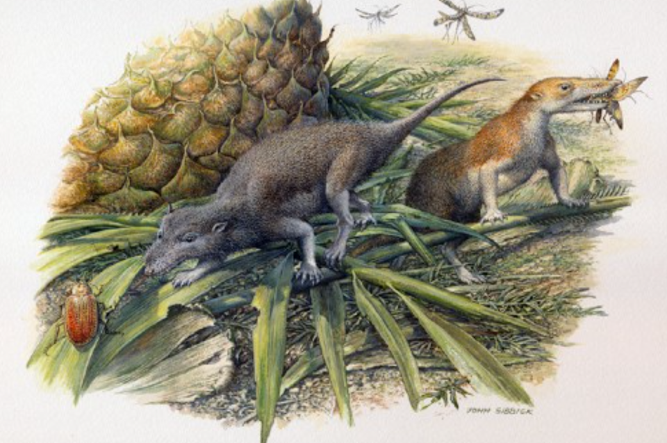 The creatures lived in the time of the early dinosaurs (University of Bristol)