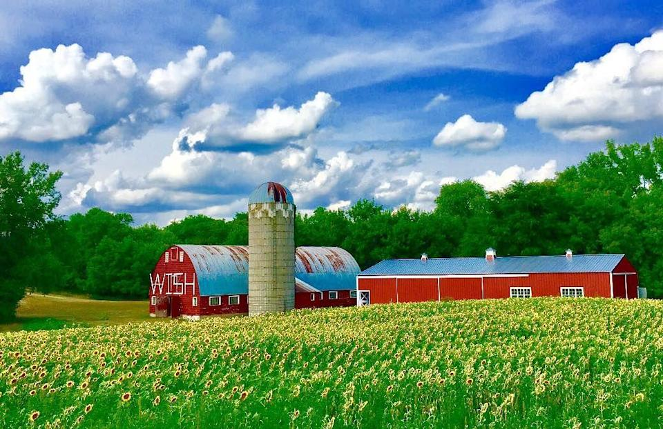 """<p>Any trip to your local sunflower field is guaranteed to be fun, but you can feel extra good about your venture to this sunflower attraction and charity. Stop by the <a href=""""https://www.facebook.com/wishuponasunflower/"""" rel=""""nofollow noopener"""" target=""""_blank"""" data-ylk=""""slk:Wish Upon a Sunflower Fields"""" class=""""link rapid-noclick-resp"""">Wish Upon a Sunflower Fields</a> at this Cold Spring, Minnesota, farm and your donation in exchange for entry will given to the <a href=""""https://secure2.wish.org/site/TR/WishYourWay/Make-A-WishMinnesota?px=3148331&pg=personal&fr_id=2667"""" rel=""""nofollow noopener"""" target=""""_blank"""" data-ylk=""""slk:Make-a-Wish Foundation of Minnesota"""" class=""""link rapid-noclick-resp"""">Make-a-Wish Foundation of Minnesota</a>. </p><p><a class=""""link rapid-noclick-resp"""" href=""""https://go.redirectingat.com?id=74968X1596630&url=https%3A%2F%2Fwww.tripadvisor.com%2FTourism-g42964-Cold_Spring_Minnesota-Vacations.html&sref=https%3A%2F%2Fwww.countryliving.com%2Flife%2Ftravel%2Fg21937858%2Fsunflower-fields-near-me%2F"""" rel=""""nofollow noopener"""" target=""""_blank"""" data-ylk=""""slk:PLAN YOUR TRIP"""">PLAN YOUR TRIP</a></p>"""