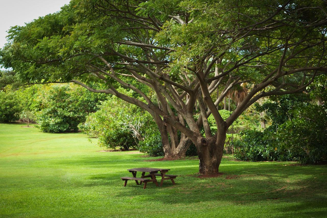 """<p>Want to add some shade to your garden, <a href=""""https://www.housebeautiful.com/lifestyle/g30110827/patio-plants/"""" target=""""_blank"""">patio</a>, or deck? Trees are the answer. Trees provide shelter and food for wildlife, and when you plant your own you get to watch it grow up! Make sure to choose a variety that will survive winters in your area (check your USDA Hardiness zone <a href=""""https://planthardiness.ars.usda.gov/PHZMWeb/"""" target=""""_blank"""">here</a>) and read the plant description to learn its mature height and width. When planting, steer clear of utility lines, driveways, and—of course—your house, to give the tree plenty of room to stretch its branches and roots. When you're ready to plant, dig a hole that's the same depth as the root ball; planting too deep is a common mistake! Remove the container, or if it's balled and burlapped, cut off the burlap and wire because some burlap won't decompose. It's fine to add compost to improve soil texture, but mix it into the entire planting bed, not just in the hole itself. <a href=""""https://hgic.clemson.edu/factsheet/planting-trees-correctly/"""" target=""""_blank"""">Research has shown</a> that putting amendments only into the hole causes the tree's roots to stay in the tiny hole instead of spreading out into the native soil. Refill the hole with the dirt you removed, gently tamp down soil, and water well. Keep it watered the first year or two as it gets established. </p><p>Ready? Here are a few fast-growing shade trees for your garden:</p>"""