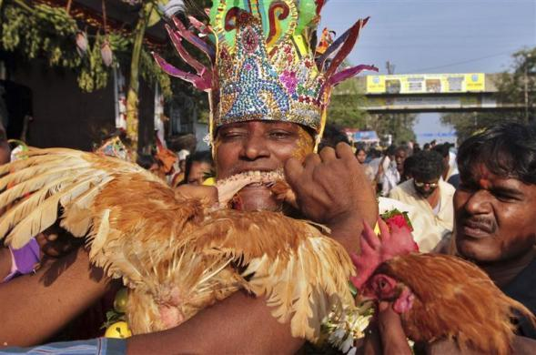 A man dressed as the goddess Angalamman bites the neck of a rooster as part of a ritual on the Mayana Kollai festival, in Chennai February 21, 2012. The festival is celebrated a day after the Mahashivratri festival in the southern state of Tamil Nadu.