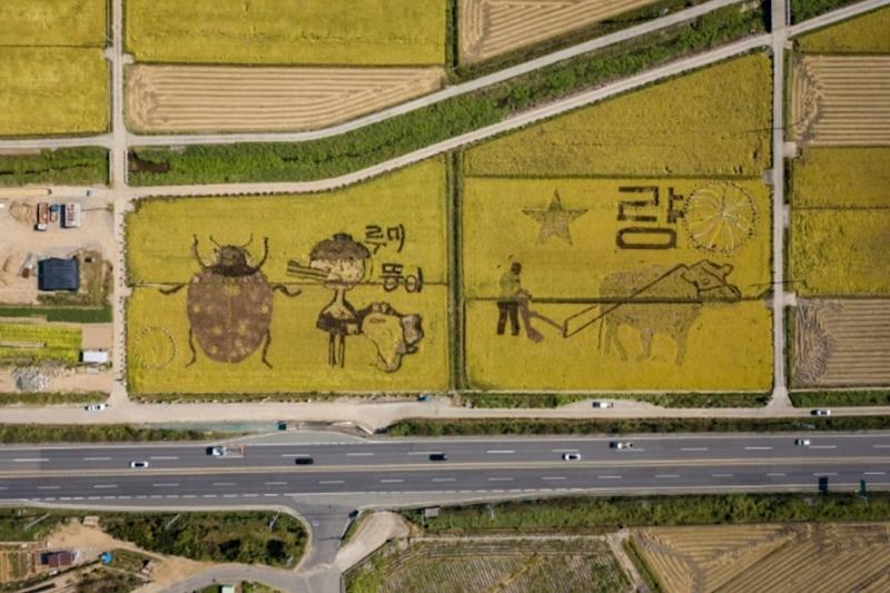 Giant Crane Carved Out in Paddy Fields of South Korea Urges People to 'Cheer Up' in Pandemic