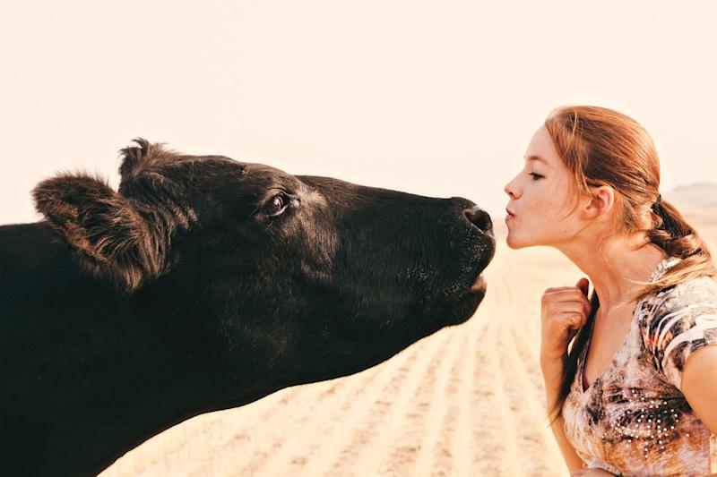 People are being warned not to take part in a bizarre kissing cow challenge [Photo: Getty]