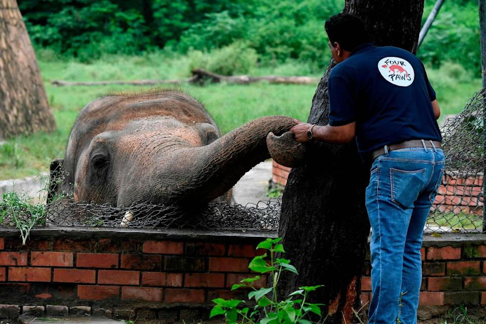 Kaavan has languished at Marghazar Zoo in the Pakistani capital of Islamabad for more than 35 years (AFP via Getty Images)