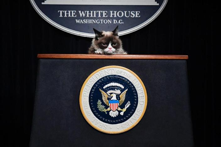 """The """"No Face"""" that launched a million memes: Grumpy Cat poses at a mock up of a White House press briefing at Madame Tussaud's in Washington DC (AFP Photo/Larry French)"""