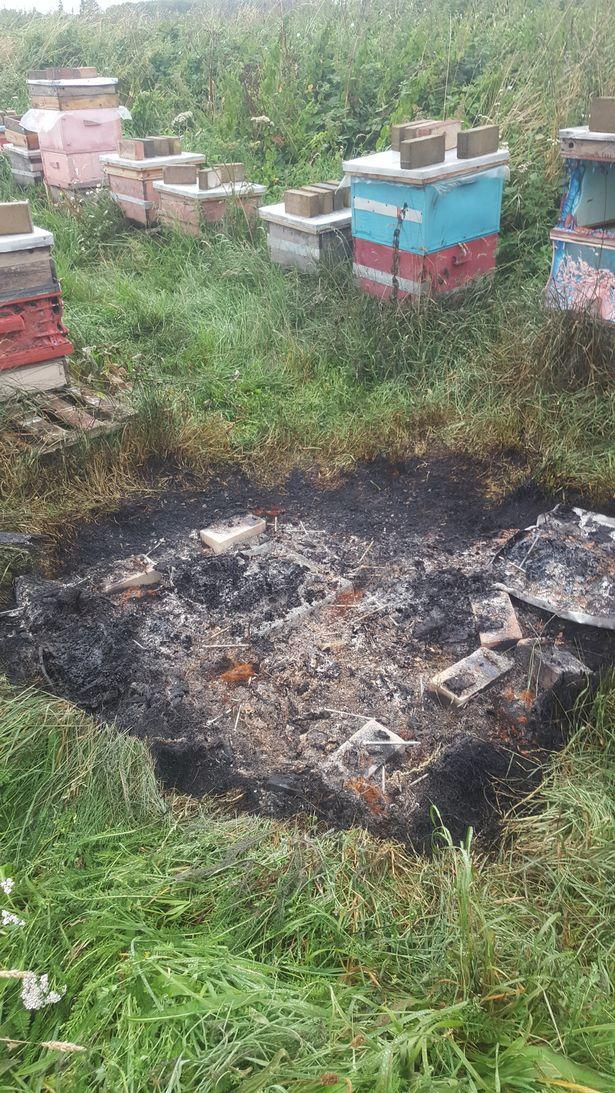 The hives had been scorched.