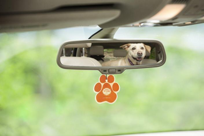 Pet House Pina Colada Car Air Freshener (Photo: Chewy)
