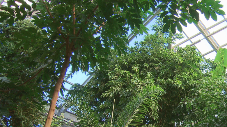 Assiniboine Park Conservatory nearing end of its life, slated to close permanently April 2