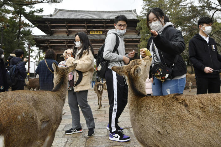 Chinese tourists wearing face masks visit famed Nara Park in Nara, western Japan, Wednesday, Jan. 29, 2020. Japan's health officials on Tuesday said that it has confirmed what could be the first human-to-human infection in the country. The first suspected person-to-person infection involves a male patient in his 60s from Nara, who has not traveled to Wuhan. The man, however, is a tour bus driver who served two groups of Chinese tourists from Wuhan from Jan. 8-16. (Nobuki Ito/Kyodo News via AP)