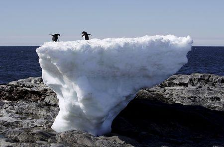 FILE PHOTO: Two Adelie penguins stand atop a block of melting ice on a rocky shoreline at Cape Denison, Commonwealth Bay, in East Antarctica January 1, 2010.    REUTERS/Pauline Askin/File Photo