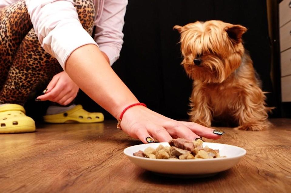 If you take your dog on vacation only to find that they're noticeably absent during dinner, then it might be time to consider that he or she is feeling down in the dumps in the strange environment. Just like humans, dogs will exhibit decreased appetites when they are preoccupied with their own stress and anxiety.