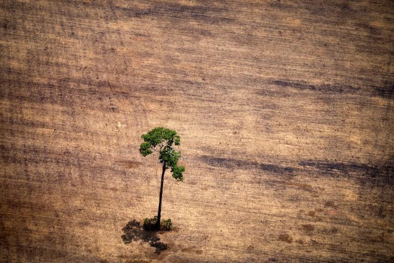 INPE is already in Brazilian President Jair Bolsonaro's crosshairs over data showing a surge in deforestation in recent months (AFP Photo/RAPHAEL ALVES)