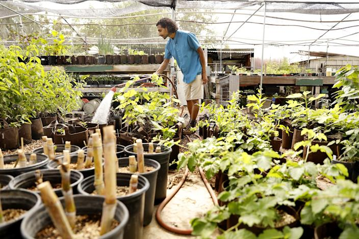 "Rishi Kumar waters plants in the organic nursery at his farm in Pomona. <span class=""copyright"">(Christina House / Los Angeles Times)</span>"