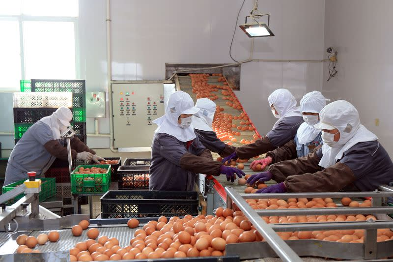 FILE PHOTO: Workers wearing face masks sort and package eggs at a factory, as the country is hit by an outbreak of the novel coronavirus, in Rongcheng