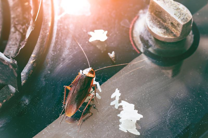 Cockroach in kitchen as pest controller urges residents not to store reusable bags under the kitchen sink.