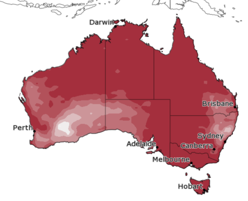 A map produced by the Bureau of Meteorology showing Australia's chance of above median minimum temperature for December.