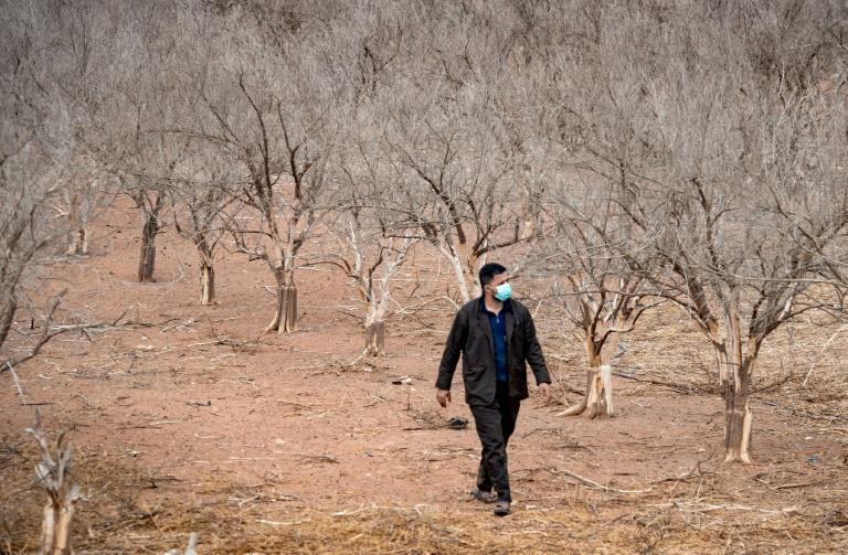 Orange groves decimated by drought on the southern Moroccan plains around Agadir, as farmers bemoan a diversion of reservoir water to households