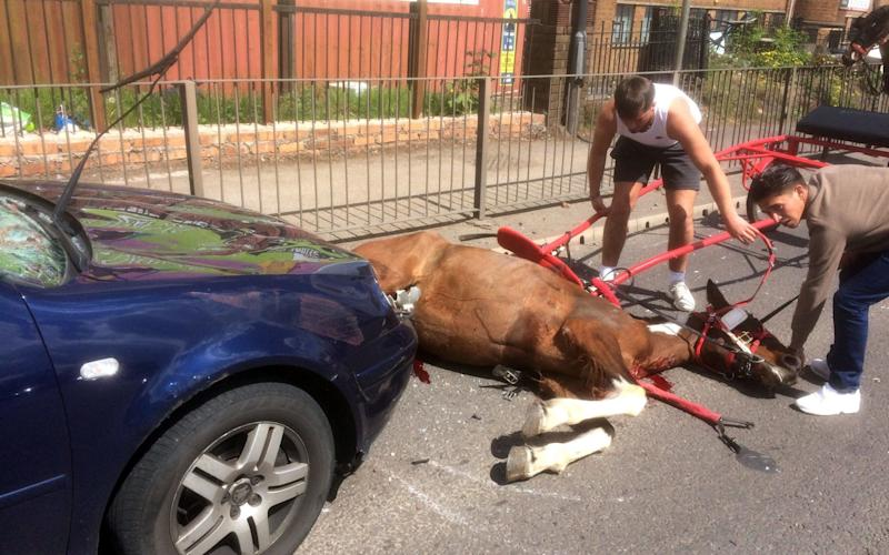 The horse that was left lying in the road, bleeding from its wounds after colliding with a car - PA