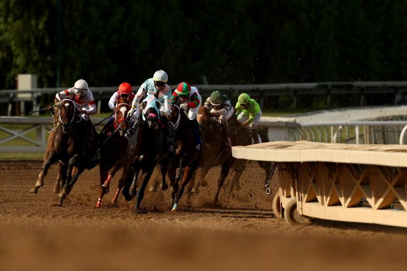 ARCADIA, CALIFORNIA - NOVEMBER 02: The field rounds the corner during the Sprint at Santa Anita Park on November 02, 2019 in Arcadia, California. (Photo by Joe Scarnici/Getty Images)