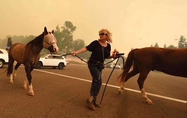 <p>A woman evacuates horses as strong Santa Ana winds blow fire and smoke from the Canyon 2 Fire toward them on Oct. 9, 2017 in Orange, Calif. (Photo: Robyn Beck/AFP/Getty Images) </p>