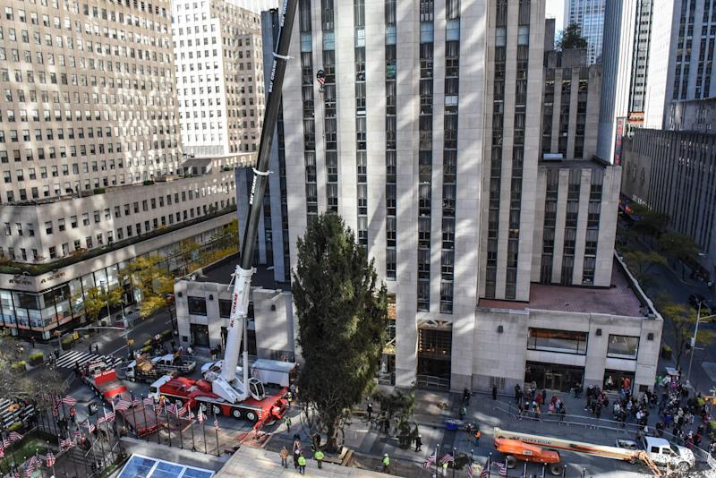 A crane hoists the Rockefeller Center tree upright on Saturday in New York City.