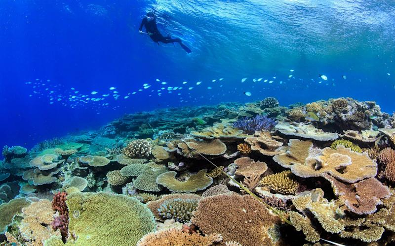 Coral becomes deformed as a result of acidified oceans, a study has found - TANE SINCLAIR-TAYLOR/AFP/Getty Ima