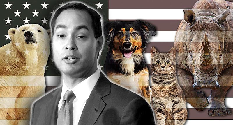 Julian Castro's animal rights policy. (Photo illustration: Yahoo News; photos: AP, Getty Images(3), AP)