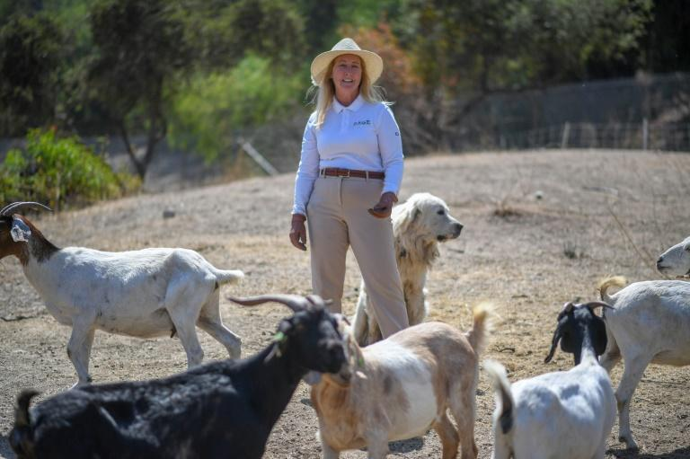 Alissa Cope says the cost of employing the goats is comparable to what authorities would pay for human workers -- at a lower environmental toll