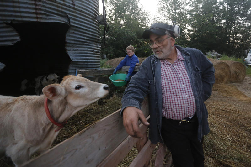 In this Thursday Aug. 15, 2019 photo, dairy farmer Fred and Laura Stone work on their dairy farm in Arundel, Maine. The couple's dairy farm has been forced to shut down after sludge spread on the land was linked to high levels of PFAS in the milk. Their blood has tested high for PFAS. (AP Photo/Robert F. Bukaty)