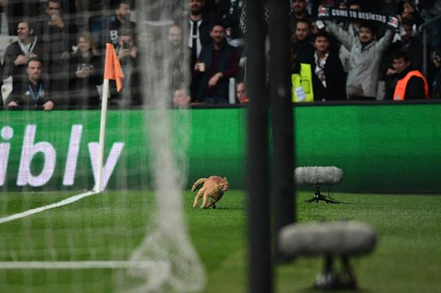 Cat stops play: A cat runs onto the pitch during the Champions League match between Besiktas and Bayern Munich in Istanbul (AFP Photo/OZAN KOSE)