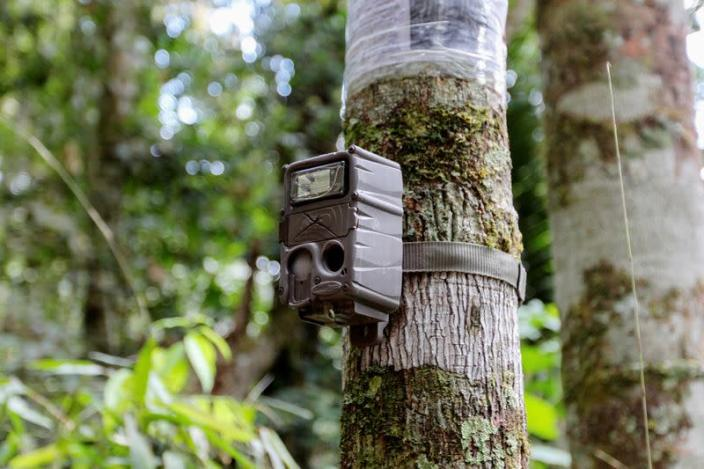 A camera trap installed by workers of the WebConserva Foundation, is seen installed in the trunk of a tree in San Lucas