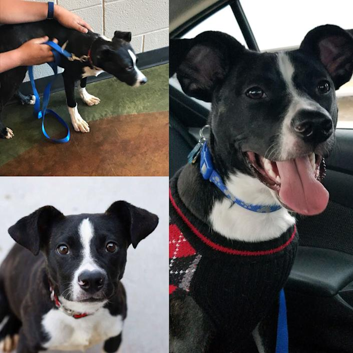 """""""The first time we took Oliver on a car ride, he was shaking and crying (we assume because the only time he had ever been in a car before was to take him to the shelter). Now he loves car rides because he knows he's going to get to see a new friend or go play somewhere!"""" -- <i>Jenna Gunselman, Oliver's mom </i>"""