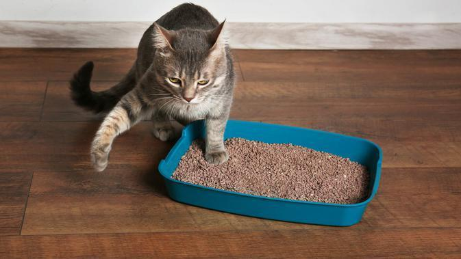 Litterbox kucing (Shutterstock)