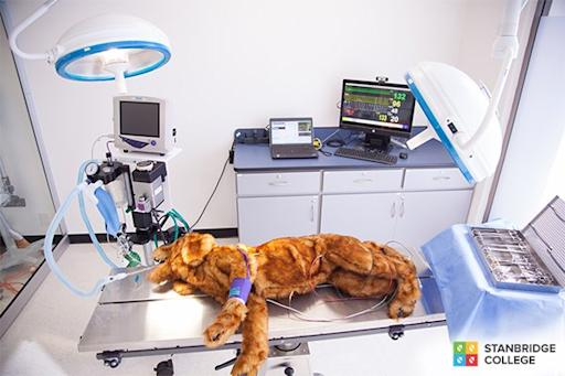 World's First High-Fidelity Canine Patient Training Simulator Built by Cornell Professor at Stanbridge College