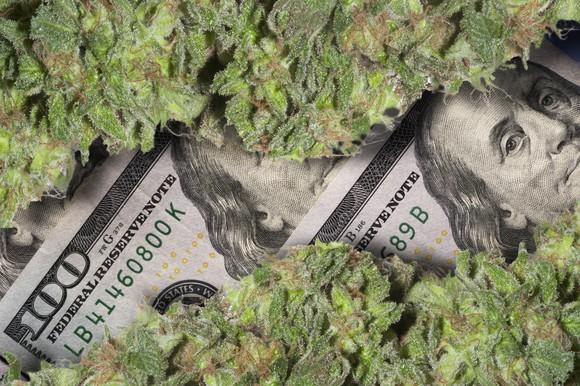 Two rows of cannabis buds lying atop neatly arranged hundred-dollar bills.
