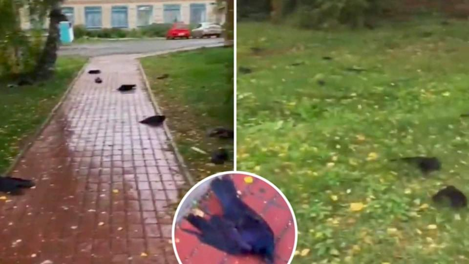 Russia: Hundreds of dead ravens fall from sky; experts baffled