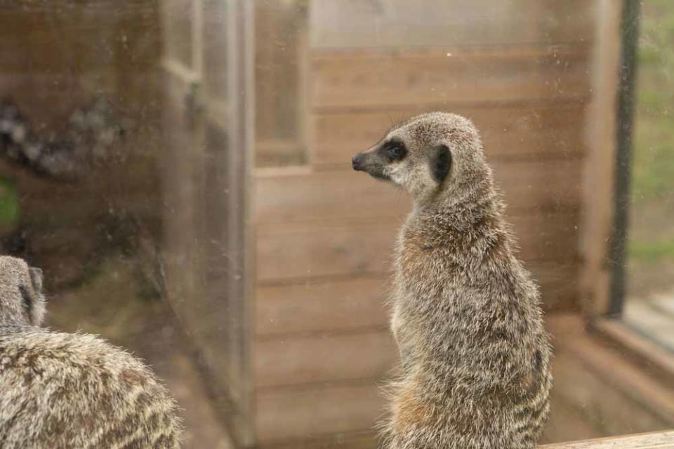 Originally a sanctuary for birds of prey, Eagle Heights is now a wildlife foundation and home to nine meerkats (PA Real Life/Virgin Experience Days).