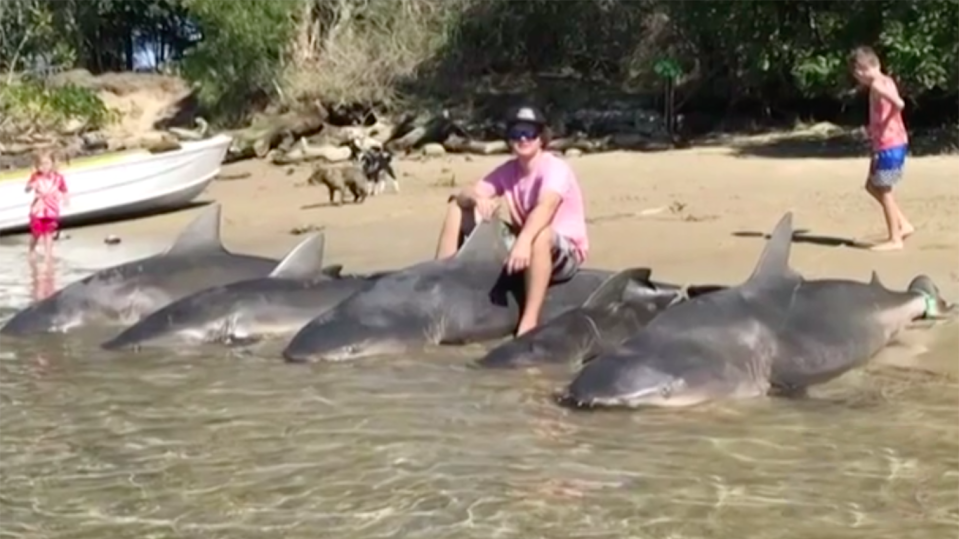 The same fisherman last month pulled out five sharks 100 metres from where children were swimming. Source: 7 News