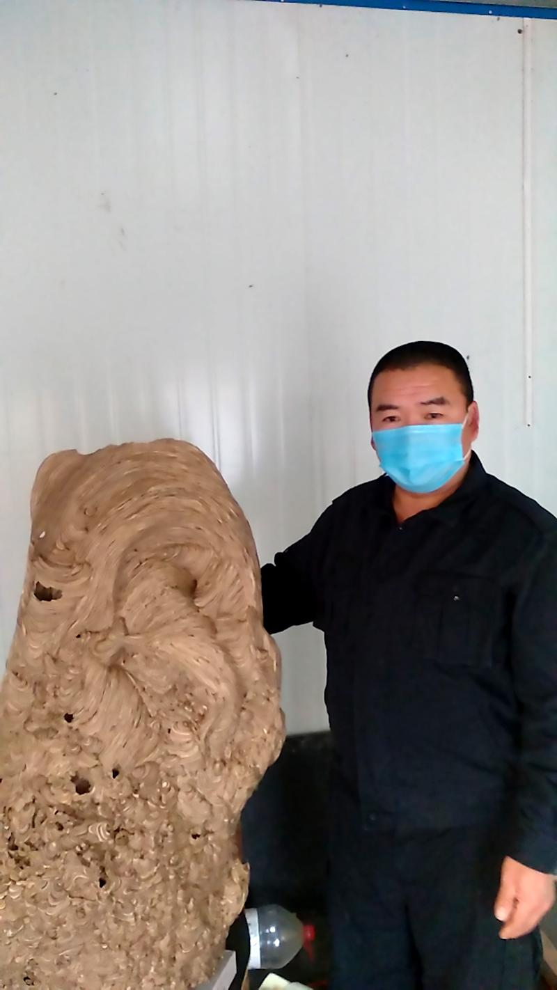 Pic Shows: Homeowner Zhang Juwei and the wasp nest; This is the huge wasp nest found in a newly built home which went unoccupied for so long it was taken over by the colony of flying insects.