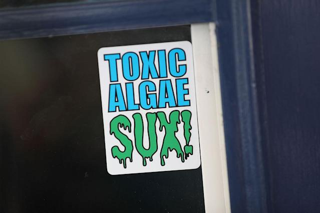 <p>A sticker is shown in a window near where algae is fouling the St. Lucie River in Stuart, Fla., July 11, 2016. (Photo: Joe Raedle/Getty Images) </p>