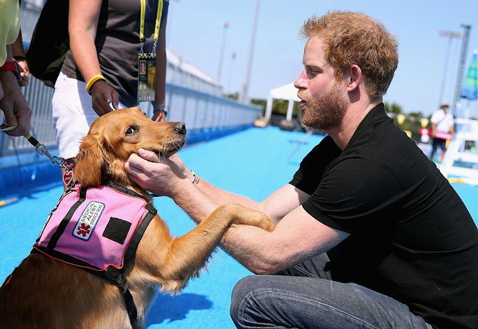 <p>Prince Harry meets Jasmine, a medical alert dog, ahead of the Invictus Games in Orlando.</p>