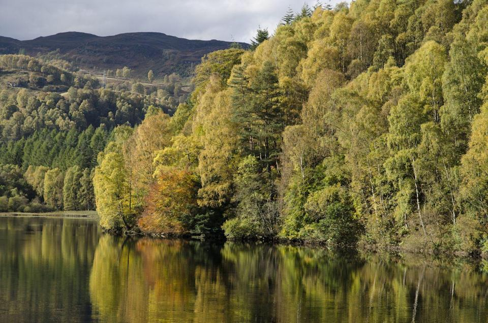 """<p>If you're heading to Perthshire this autumn make sure to stop by at Faskally Wood. Discover the joyful hues of autumn across a wide range of tree species, some of which are more than 200 years old. It really is an unmissable sight. </p><p><a class=""""link rapid-noclick-resp"""" href=""""https://www.visitscotland.com/info/towns-villages/faskally-wood-p249271"""" rel=""""nofollow noopener"""" target=""""_blank"""" data-ylk=""""slk:BOOK VISIT"""">BOOK VISIT</a> </p>"""
