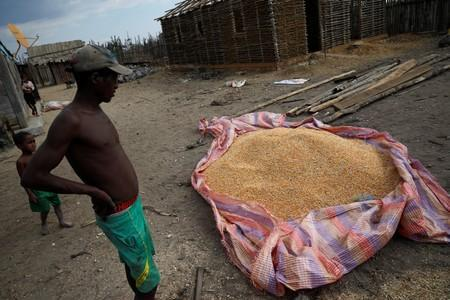 A Malagasy man stands next to pile of corn in the village of Lambokely near the city of Morondava