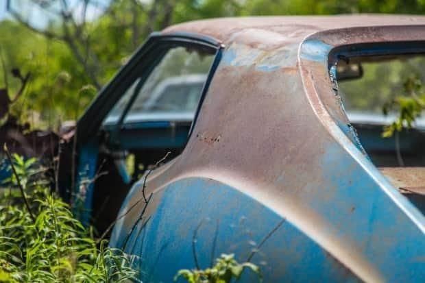 A rare American Motors Corporation muscle car, the Javelin, is overtaken by vegetation.