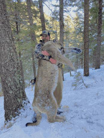 Montgomery told Colorado Parks and Wildlife that he shot a mountain lion with a handgun, a direct violation of his terms of pretrial release. (Photo: CPW)