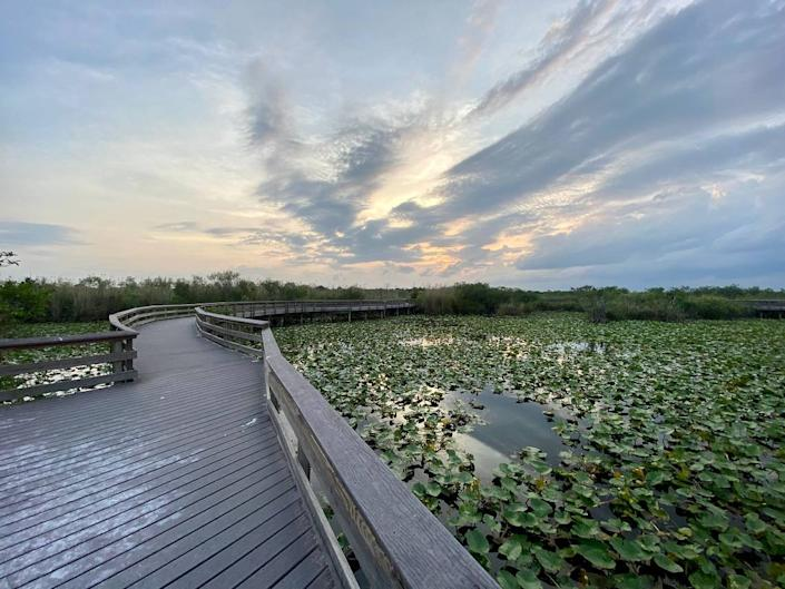 The Anhinga Trail at Everglades National Park.
